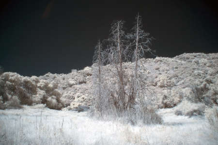 impervious: infrared forest landscape