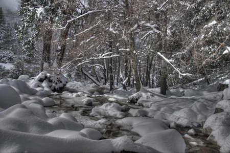 winter landscape 免版税图像