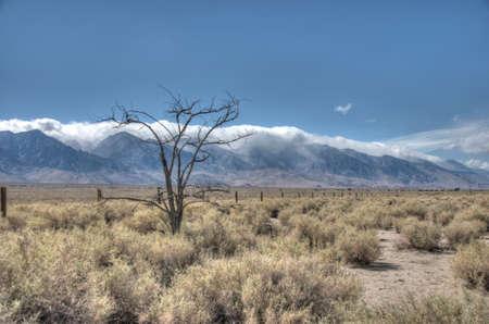 american desert landscape