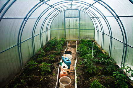 internal view of a small greenhouse