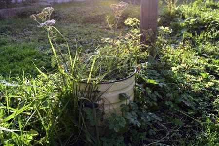 a large pot overgrown with grass