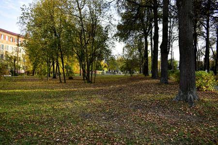 fallen leaves in poplar park 免版税图像