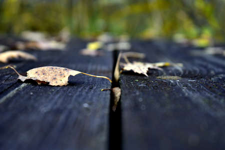 fallen leaves lie on old wooden boards in the grass
