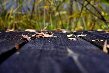 fallen birch leaves on dark wooden boards 写真素材