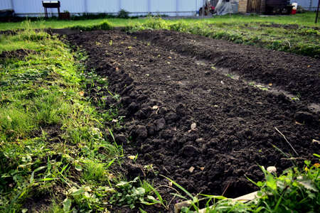 cultivated land in a garden on a personal plot