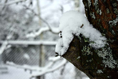snow on a cut branch in the garden