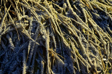 frost covered the dry grass in winter