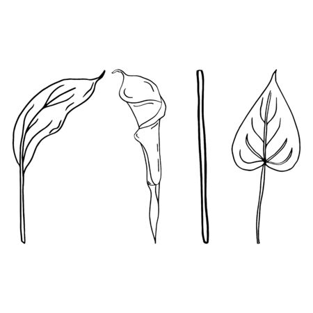 Calla flower contour line isolated on a white background. Set of black and white illustrations. Doodles. Elegant flowers for lovers, wedding, decoration, postcards. Vector illustration