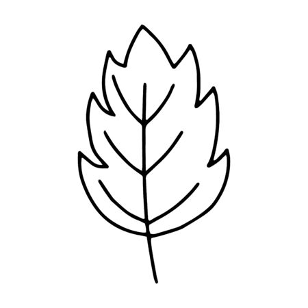 Leaf outline line.Doodle style.The leaves of the trees, monstera, tropical leaves.Black and white image isolated on a white background.Vector image