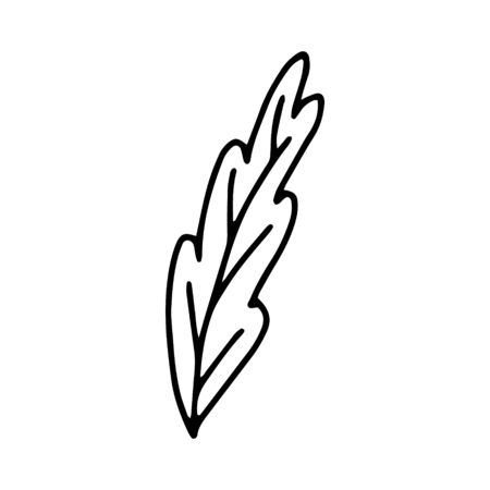 A leaf of a tree or flower is a hand-drawn drawing isolated on a white background.Black and white image.Flora and fauna.Floral design.Doodles.Vector illustration