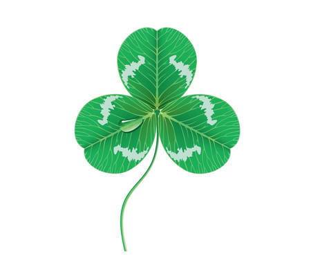 Vector. Clover leaf with dewdrop Vector
