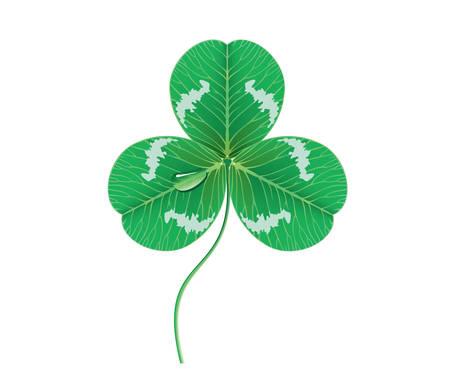 dewdrop: Vector. Clover leaf with dewdrop