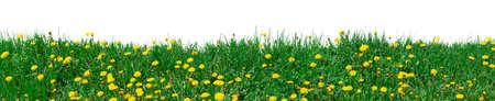 XXL grass background photo