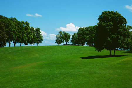 Green grass and trees on a golf field photo