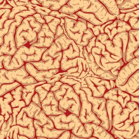 talamo: Circunvoluciones cerebrales sin costura
