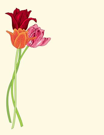 Greeting card with tulips Illustration