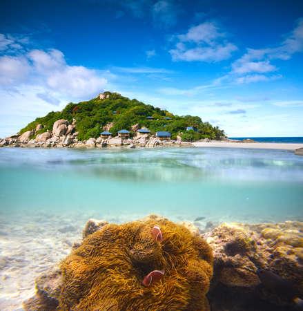 koh: Corals, clownfish and palm island - half underwater shoot  Thailand, Koh Nang Yuan Stock Photo