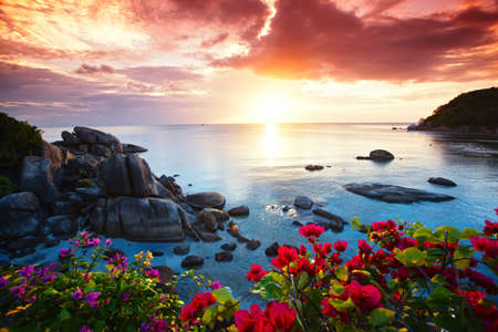 hawaii: Tranquil beach resort, beautiful morning glory on the Koh Samui, Thailand Stock Photo