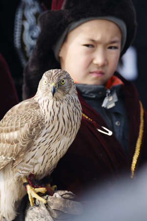 nomadism: NURA, KAZAKHSTAN - FEBRUARY 23: Eagle on kids hand in Nura near Almaty on February 23, 2013 in Nura, Kazakhstan. The traditional event happens yearly and the place becomes as a medieval times city.