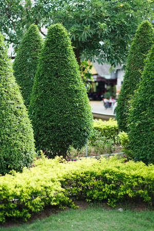 cedar: Landscaping in the garden