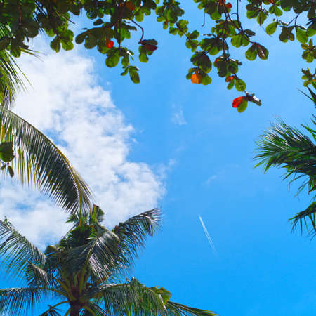 Contrail In Blue Sky. Plane, Clear Sunny Sky Background over palm trees
