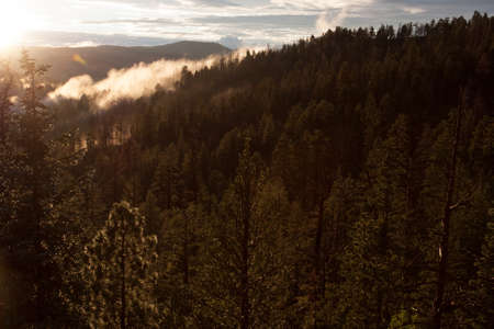 ponderosa: As the sun sets, it lights up fog in the forest valley below