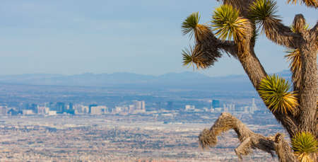 las vegas casino: Joshua Tree and the Las Vegas Strip