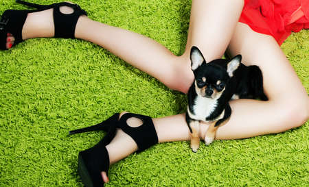 nude little girls: Dog with paws hugging over women beautiful legs