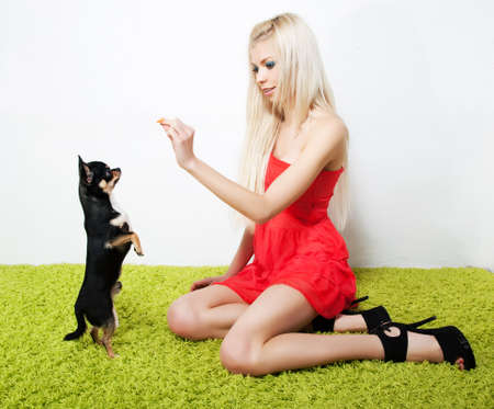 Young elegant pretty woman feeds on little puppy, studio shot