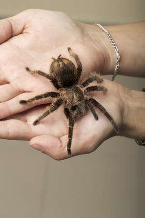 wandering:  Arachnid Monster - Brown Spider wandering Stock Photo