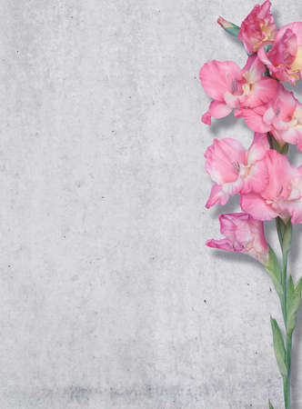 pink lily: Pink lily on a background of a concrete wall, texture, Free place. Stock Photo