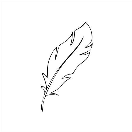 bird feather Hand drawn illustration vector eps 向量圖像