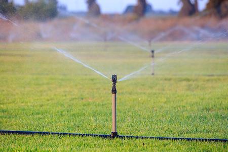sprinklers: Sprinklers watering grass.