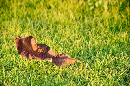 yeloow: withered leaf in yeloow on the grass background
