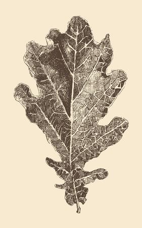 old drawing: oak leaf engraving style vintage illustration hand drawn vector