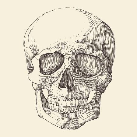 cranio umano illustrazione d'epoca inciso schizzo disegnato a mano stile retrò
