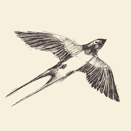 Swallow bird hand drawn vintage engraved illustration, sketch