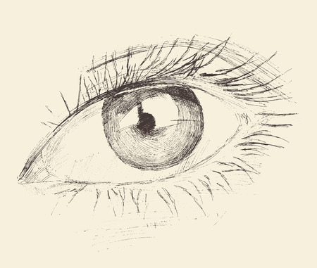eye closeup: Eye, sketch, hand drawn vintage illustration engraved, black and white
