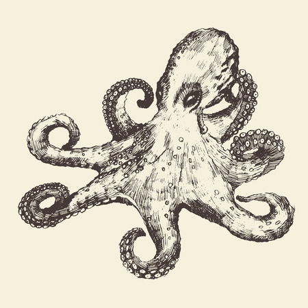 Octopus vintage illustration, engraved retro style, hand drawn, sketch Illustration