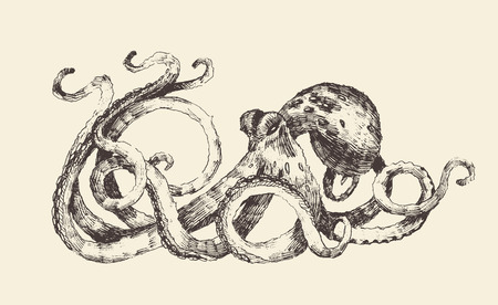 giant: Octopus vintage illustration, engraved retro style, hand drawn, sketch Illustration