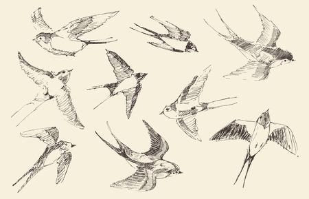golondrinas: Golondrinas de aves que vuelan establecen ilustración de la vendimia, grabado estilo retro, mano dibujada, bosquejo