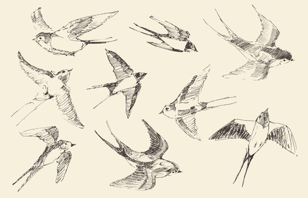 Swallows flying bird set vintage illustration, engraved retro style, hand drawn, sketch Ilustração