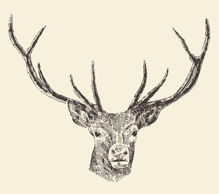 dear: Deer head engraving style, vintage illustration, hand drawn