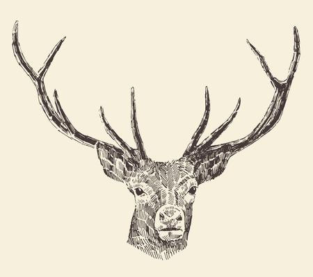 Deer head engraving style, vintage illustration, hand drawn