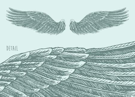 halcones: Alas de �ngel ilustraci�n boceto dibujado a mano de estilo grabado Vectores