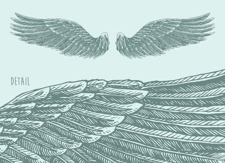 hawks: Angel wings illustration engraved style hand drawn sketch