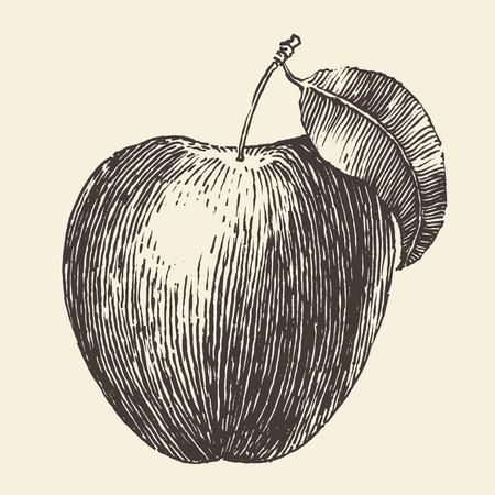 Vintage engraved illustration of an apple hand drawn vector illustration
