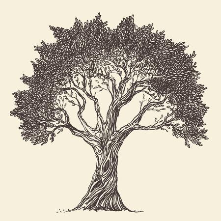 engraved: Vintage olive engraved background Hand drawn illustration Illustration