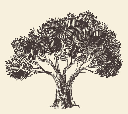 olive: Vintage olive engraved background Hand drawn illustration Illustration