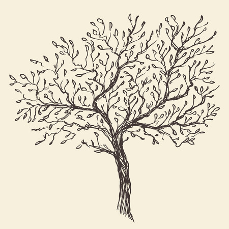 Vintage olive engraved background Hand drawn illustration 일러스트